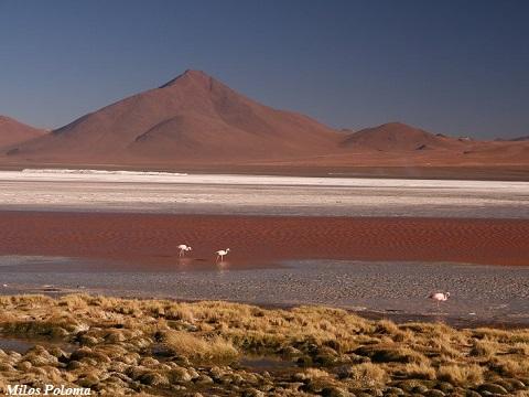 Bolivian Salt Flats Uyuni 5 days