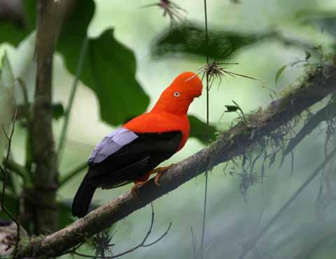 Manu National Park Plants