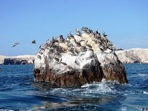 Peru Ballestas Islands