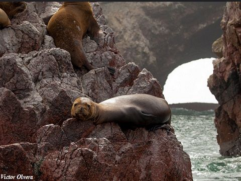 Peru Paracas Islands