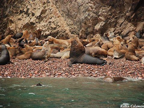Peru Paracas Island